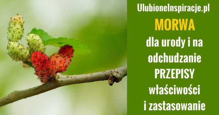 ulubioneinspiracje.pl-morwa-na-odchudzanie